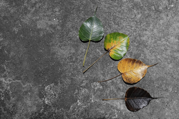 Hinterlässt farbwechsel und variationskonzept für herbst und saisonwechsel