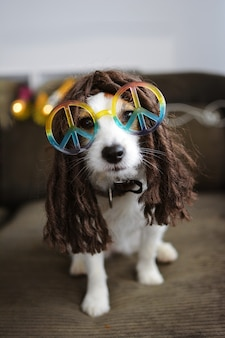 Hippy-hundkostüm lustiger jack russell bereit für karneval oder halloween-party.