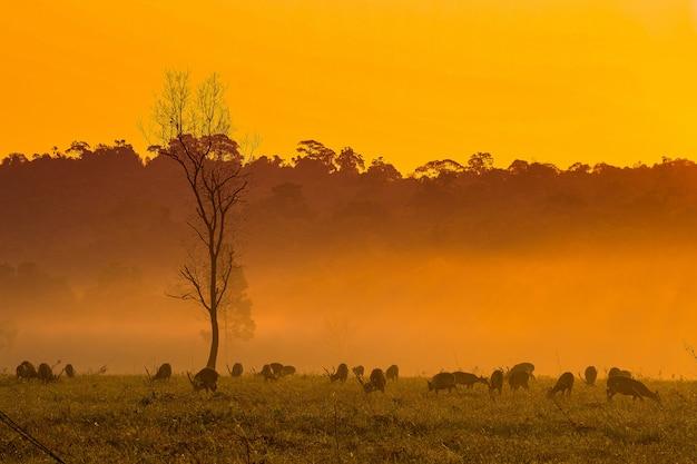 Hirsche bei sonnenuntergang