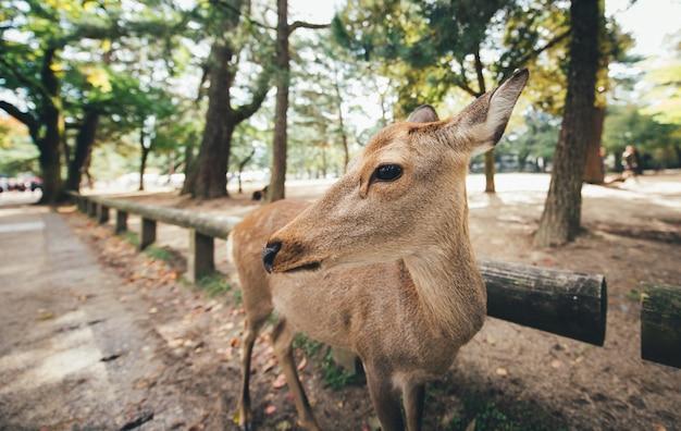 Hirsche und tiere im nara park, kyoto, japan