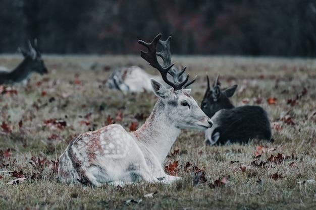 Hirschfamilie in richmond's park