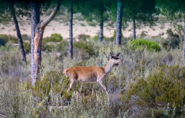 Hirschpaar im nationalpark.