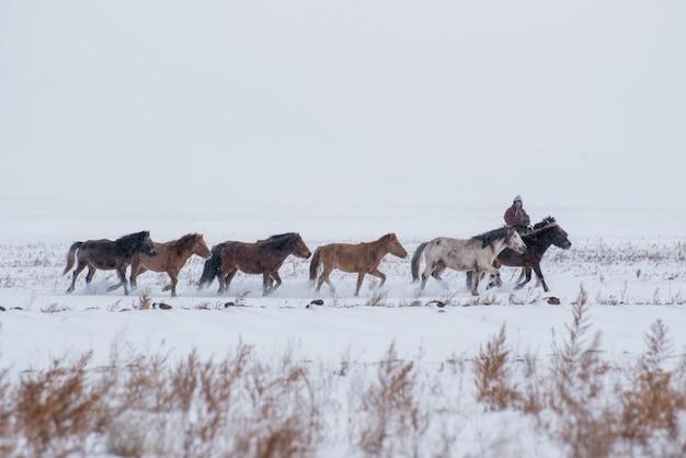 Hirte, der auf pferd sitzt und schafherde in der wiese mit schneebedeckten bergen auf hintergrund hütet