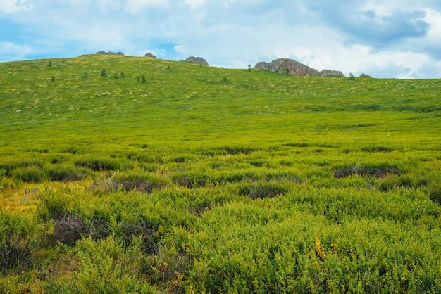 Hochlandflora am berghang vor entferntem felsen. wunderbare felsen auf hügel an sonnigem tag. reiche vegetation des hochlands. erstaunliche malerische grüne berglandschaft der majestätischen natur. bunte landschaft.