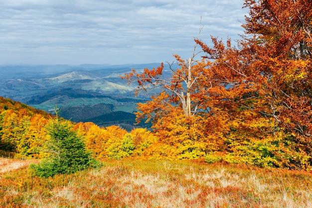Hochlandvegetation bescheidener sommer und ungewöhnlich schöne farben blühen im herbst