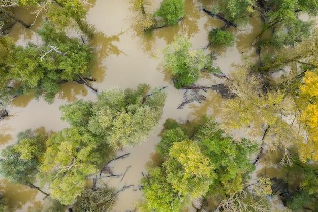 Hochwasser im wald mit grünen und gelben baumwipfeln von drohnen.