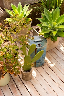 Hochwinkel verschiedene pflanzen im gewächshaus