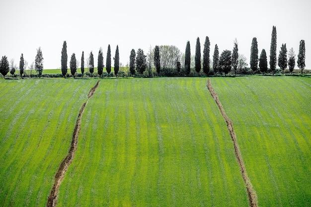 Hochwinkelaufnahme der schönen bäume auf einem grasbedeckten hügel unter dem hellen himmel