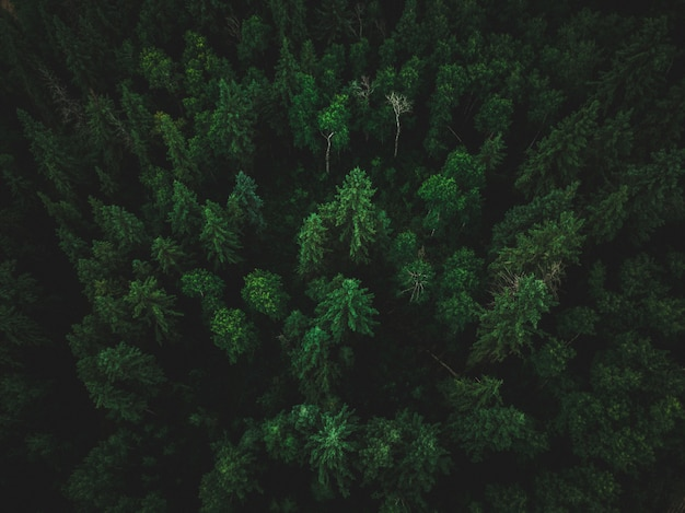 Hochwinkelaufnahme eines schönen tropischen dschungels mit exotischen hohen bäumen