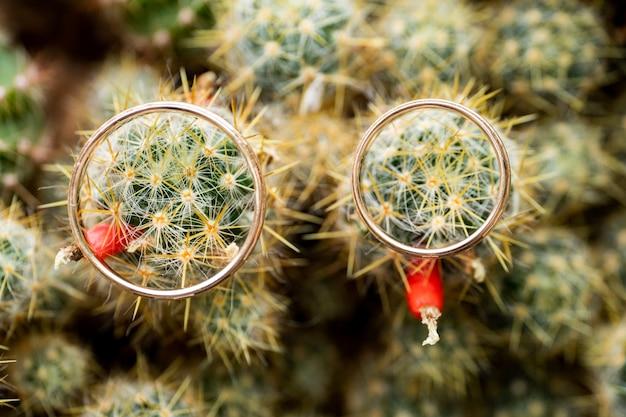 Hochzeitsgoldringe auf kaktus mit orange früchten. liebe, ehe-konzept. overhead erschossen.
