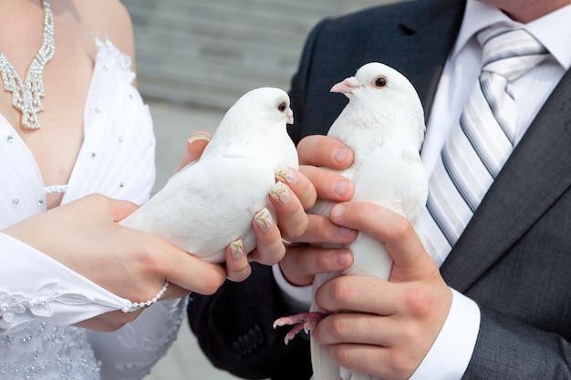 Hochzeitstauben in den händen des bräutigams und der braut