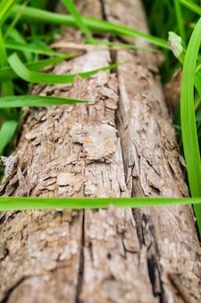 Hölzern mit hintergrund des grünen grases