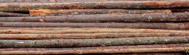 Hölzerne klotz von kiefernholz im wald, gestapelt in einem stapel. frisch gehackte baumklotz stapelten oben auf einander in einem stapel.