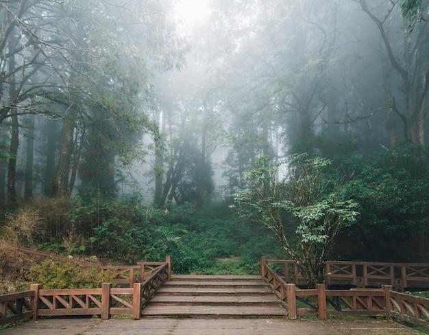 Hölzerne plattform mit zedern und nebel im wald in alishan national forest recreation area im winter in chiayi county, alishan-gemeinde, taiwan.