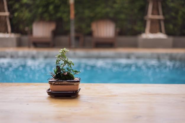 Hölzerne tischplatte und kleiner baum, bonsai in im freien mit unschärfeswimmingpool und strandstuhl