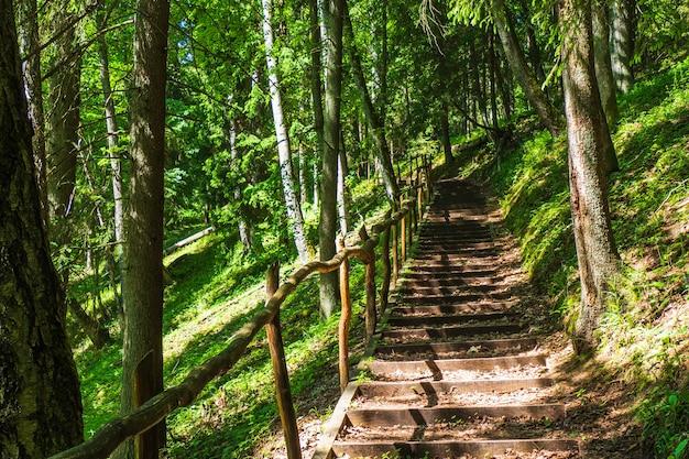 Hölzerne treppe hinauf auf einen wanderweg durch einen grünen wald.