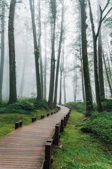 Hölzerner gehweg, der zu kiefer im wald mit nebel in alishan führt.