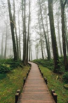 Hölzerner gehweg, der zu zedern im wald mit nebel in alishan national forest recreation area in chiayi county, alishan-gemeinde, taiwan führt.
