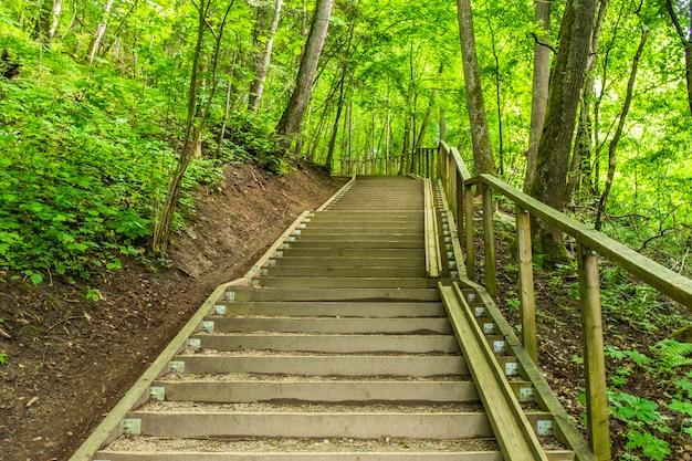 Hölzerner promenaden-touristentreppen-trail mit bäumen.