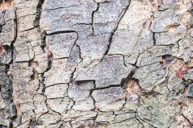 Hölzernes muster der nahaufnahmefläche an der gebrochenen haut des stammes des baumbeschaffenheitshintergrundes