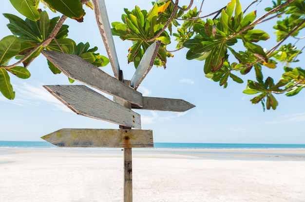 Hölzernes schild der pfeile auf dem strand mit grünpflanze