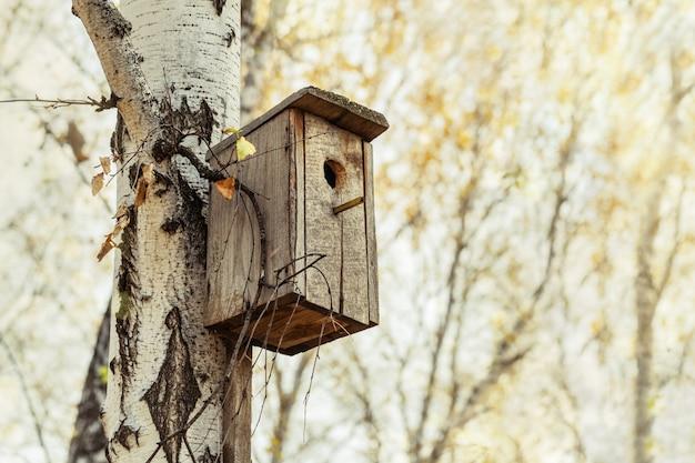Hölzernes vogelhaus auf baum im birkenwald.