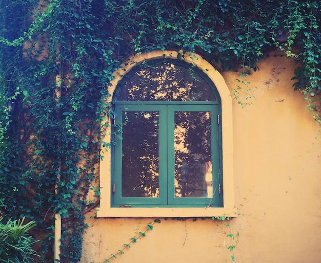 Hölzernes weinlesefenster mit kriechpflanze verlässt anlage
