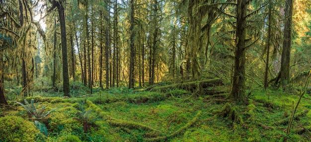 Hoh regenwald im olympic nationalpark usa