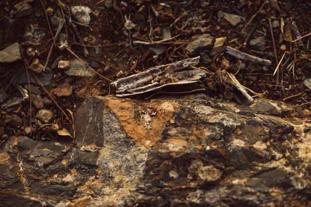 Hohe ansicht schoss vom schmutz und von den steinen