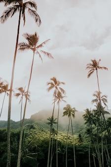 Hohe babassu-palmen unter dem verrückten himmel, umgeben von grünen bergen