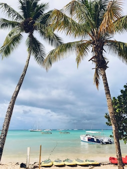 Hohe palmen erheben den bewölkten himmel am strand in der dominikanischen republik