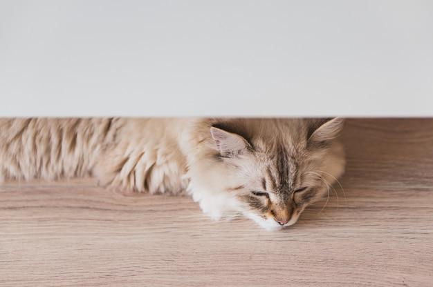Hohe winkel-nahaufnahmeaufnahme einer niedlichen katze, die auf dem holzboden unter einer weißen oberfläche liegt