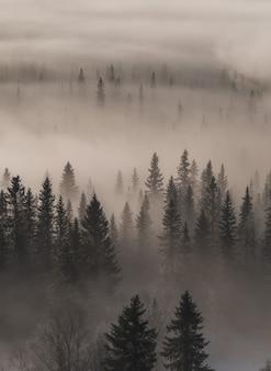 Hohe winkelansicht eines immergrünen waldes, der mit nebel bedeckt ist