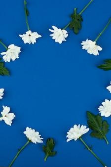 Hohe winkelansicht eines weißen gänseblümchens blüht auf einem blauen raum. runder platz für text.