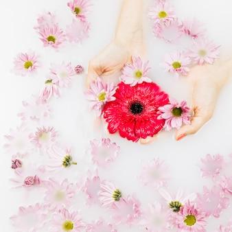 Hohe winkelsicht der hand einer frau mit den roten und rosa blumen