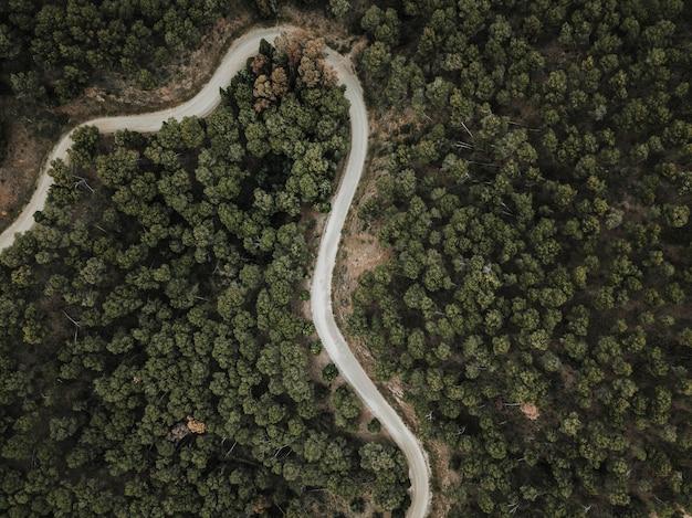 Hohe winkelsicht der kurvenreichen straße und der bäume