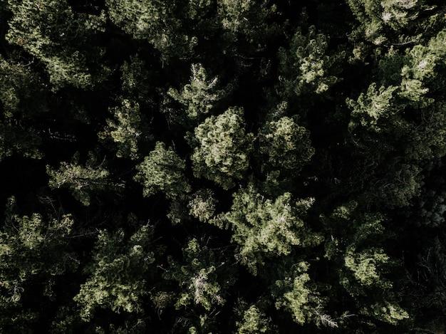 Hohe winkelsicht von den grünen bäumen, die im wald wachsen