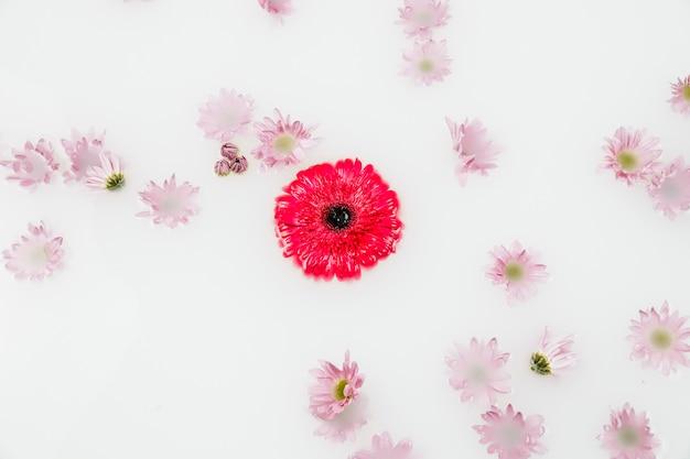 Hohe winkelsicht von den roten und rosa blumen, die auf wasser schwimmen