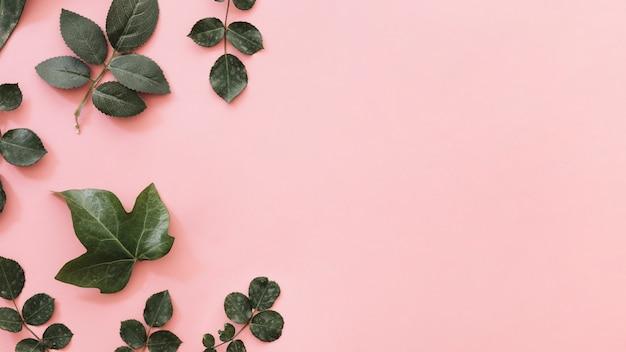 Hohe winkelsicht von den verschiedenen tropischen blättern lokalisiert auf rosa hintergrund
