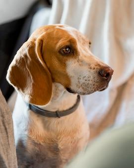 Hoher blick schöner hund