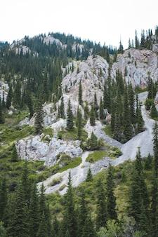 Hoher felsiger berg mit bäumen im sommer