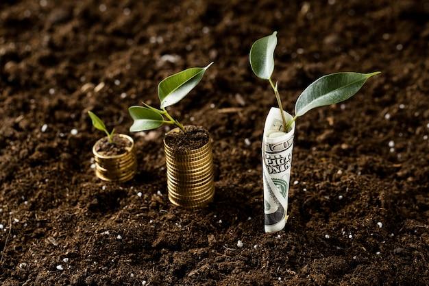 Hoher pflanzenwinkel mit auf schmutz und banknote gestapelten münzen