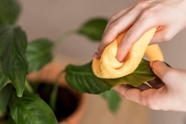 Hoher winkel der frau, die pflanzenblätter mit stoff reinigt