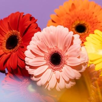 Hoher winkel der frühlingsgerberablumen