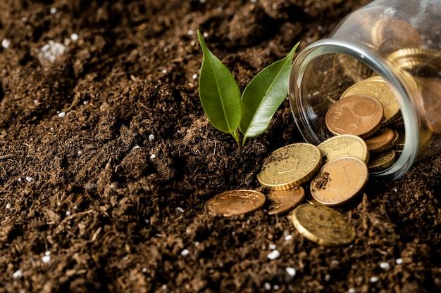 Hoher winkel der münzen, die vom glas auf schmutz mit pflanze verschüttet werden