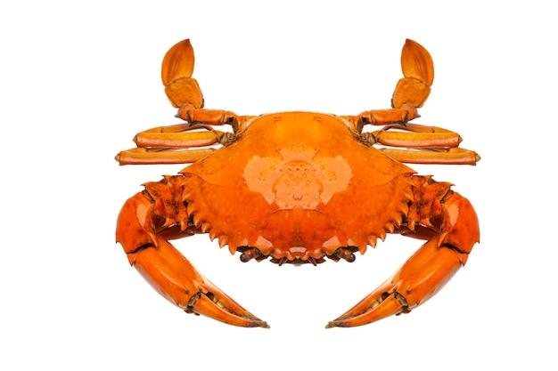 Hoher winkel einer krabbe