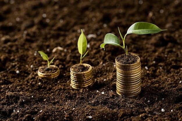 Hoher winkel von münzen, die mit pflanzen auf schmutz gestapelt sind