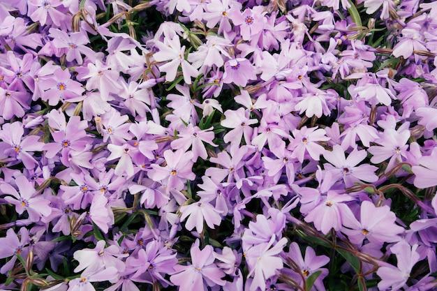 Hoher winkelschuss der schönen lila blumen in einem feld, das an einem sonnigen tag gefangen genommen wird