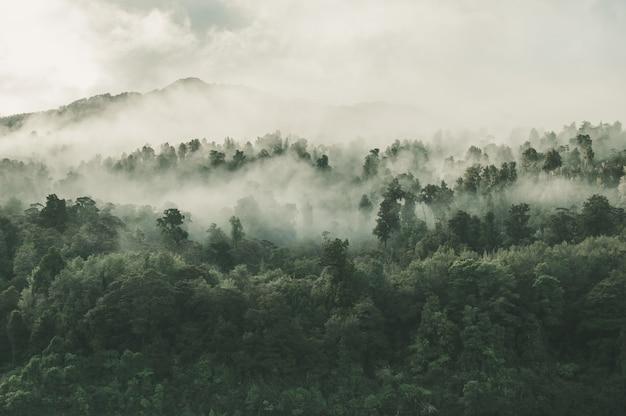 Hoher winkelschuss eines schönen waldes mit vielen grünen bäumen, die im nebel in neuseeland eingehüllt werden