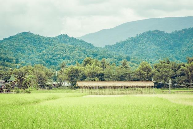 Hohes gras mit grüner landschaft und vintage-effekt mitten im wald